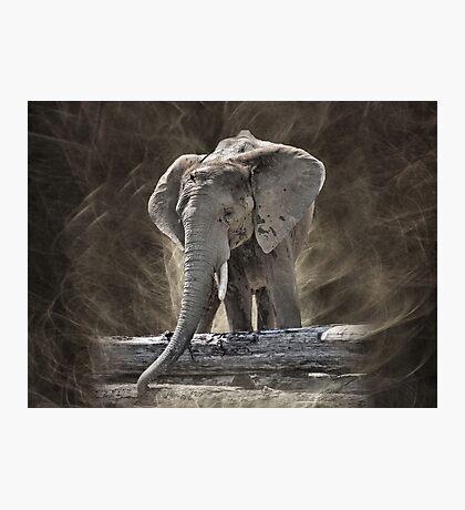 Elephant Photographic Print