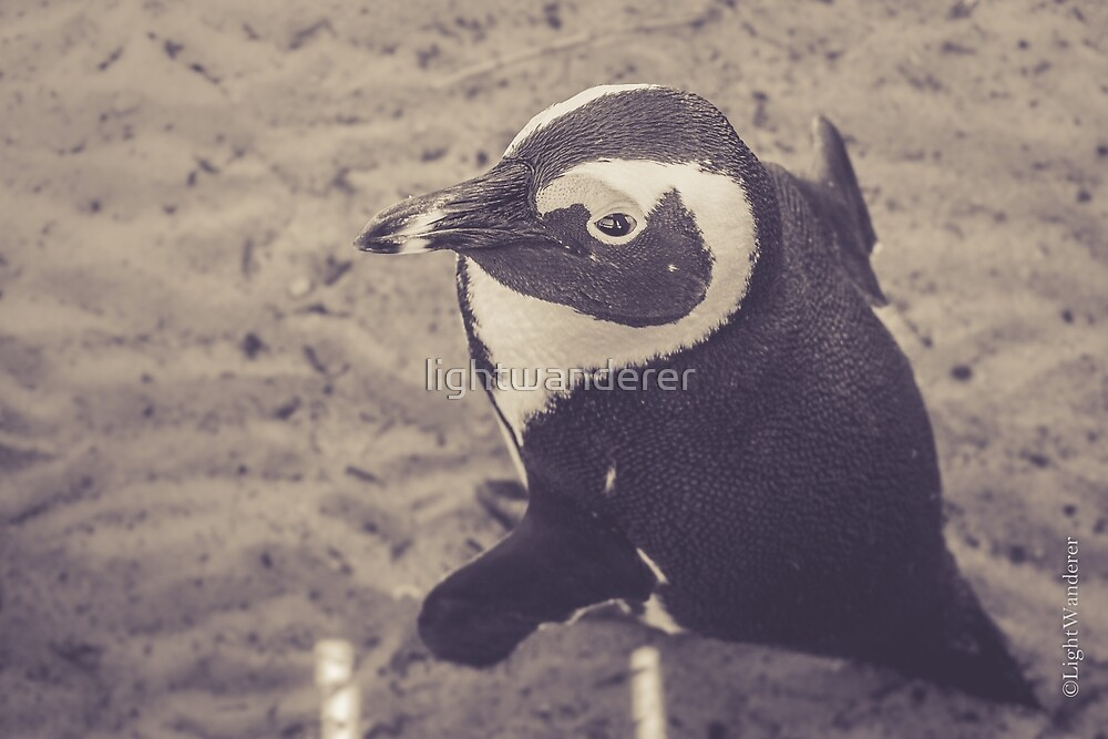 Adorable African Penguin Series 2 of 4 by lightwanderer