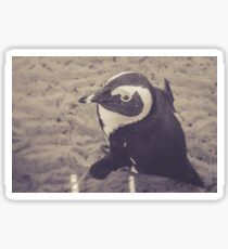 Adorable African Penguin Series 2 of 4 Sticker
