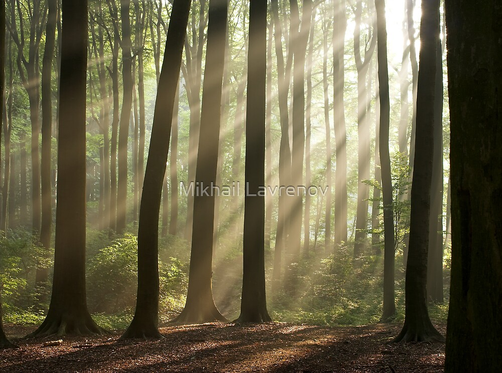 Sun rays in morning forest by Mikhail Lavrenov