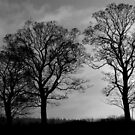 Storm by Niamh Harmon