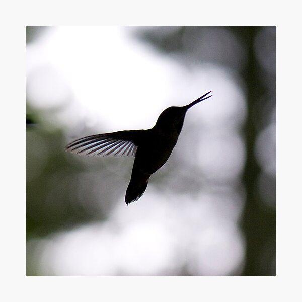 Evening Song Photographic Print