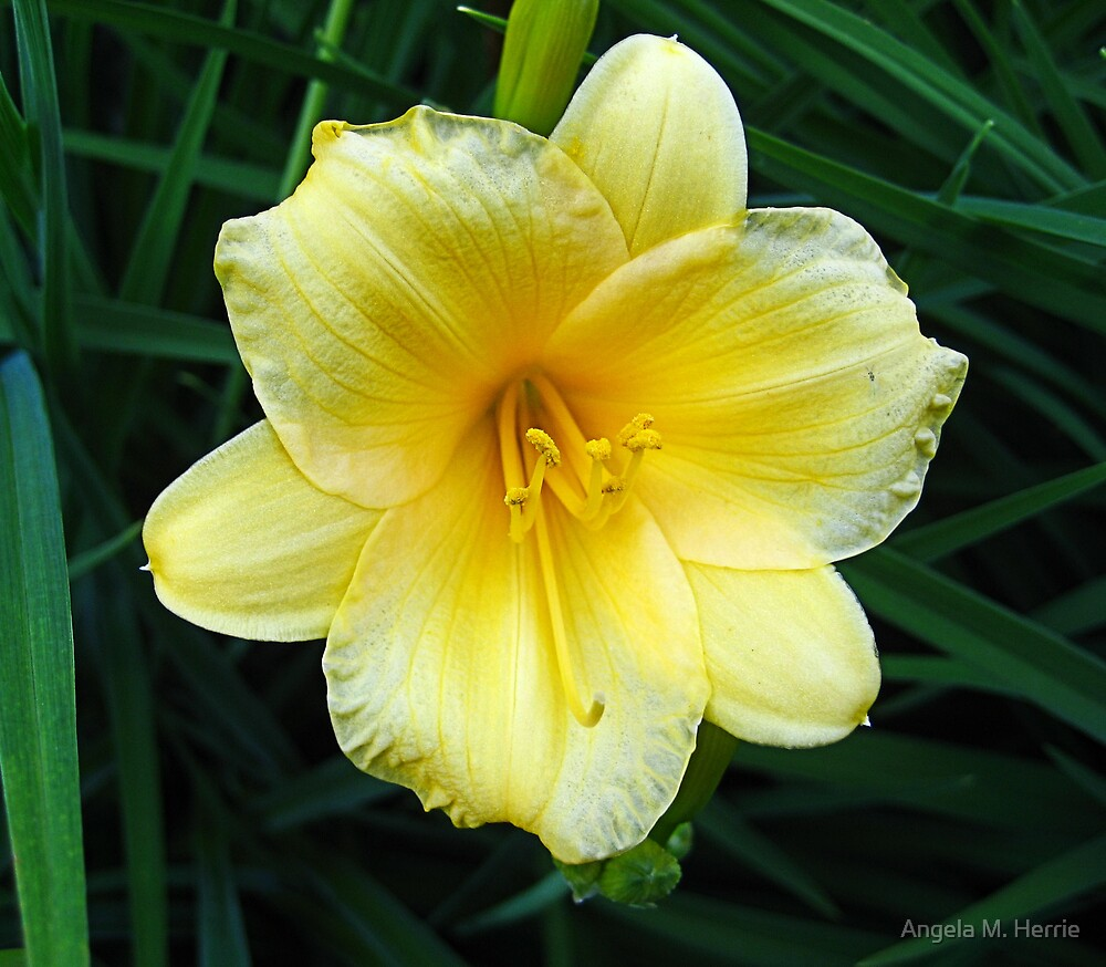 Green and Yellow by Angela M. Herrie