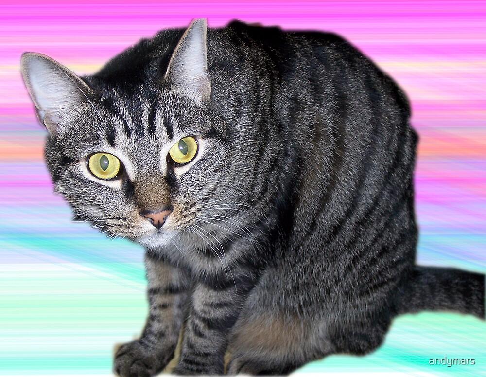 Mocha the Cat by andymars
