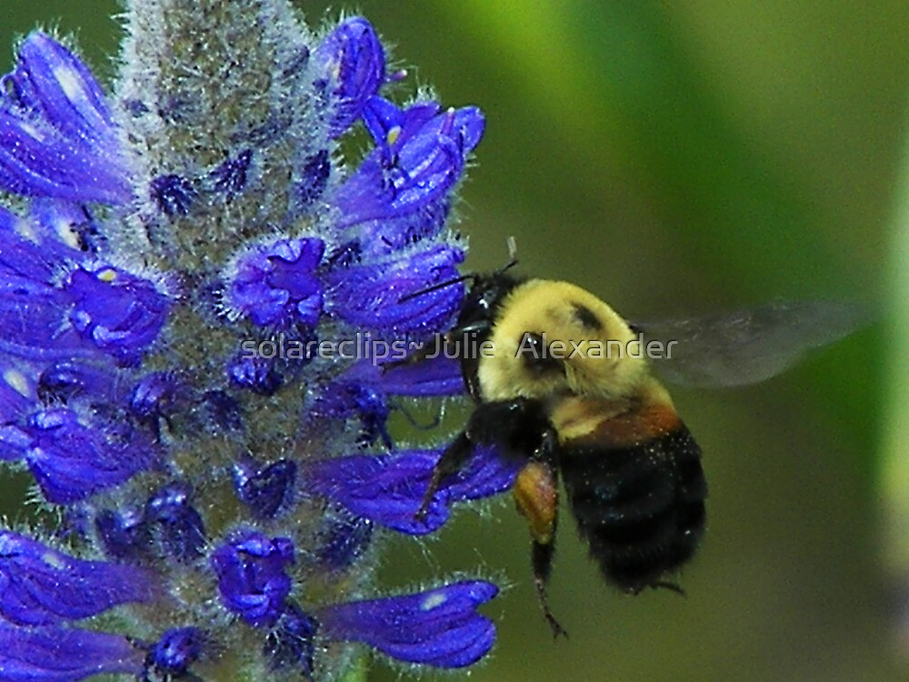 The Pollinator, the sequel by solareclips~Julie  Alexander
