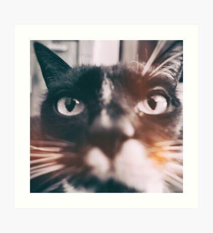 photo cat Jagoda #photo #cat Art Print