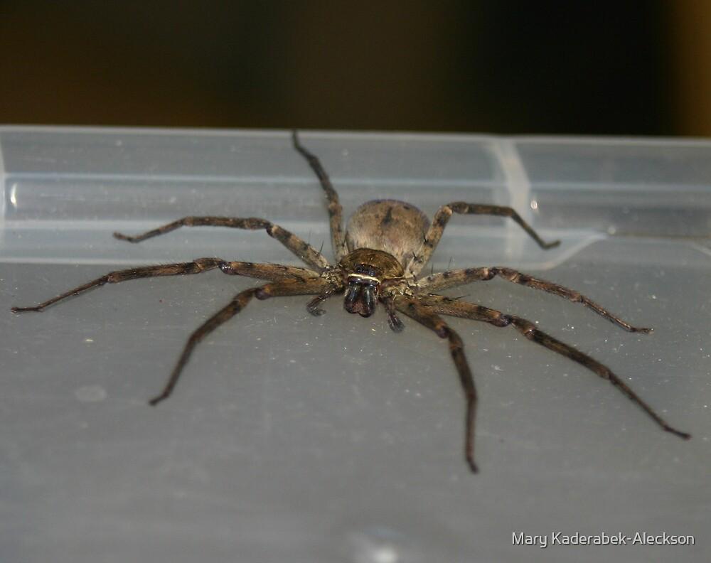 Bedroom Spider by Mary Kaderabek-Aleckson
