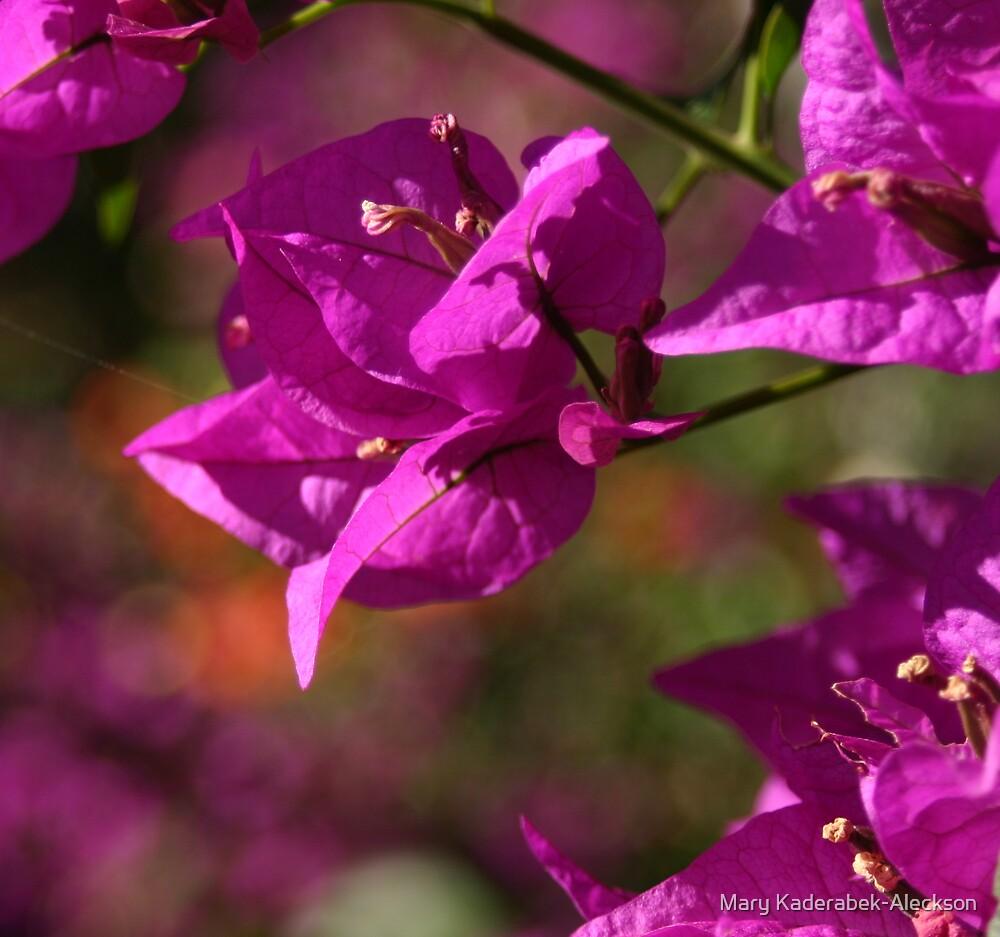 Maui Flower by Mary Kaderabek-Aleckson