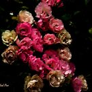 Sunday Roses by photorolandi