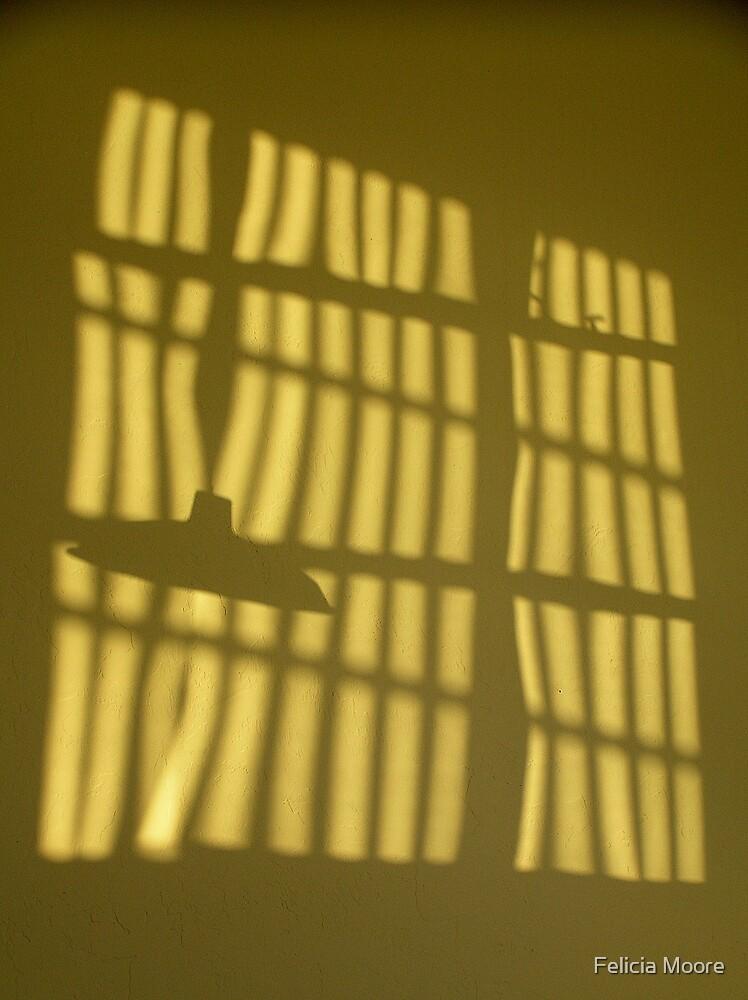 Tucson Morning Shadows by Felicia Moore