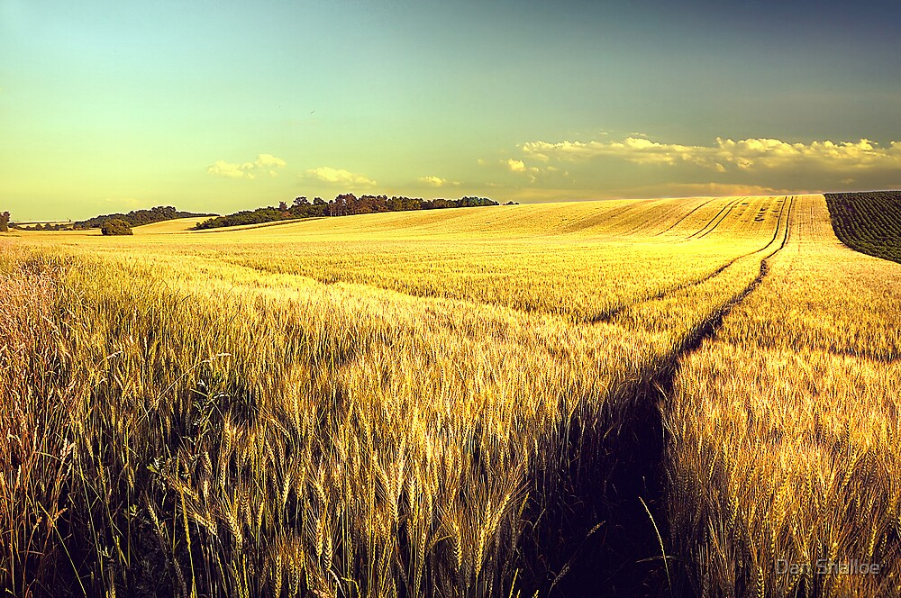summer by Dan Shalloe