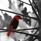 Pretty Birdie by Al Bourassa