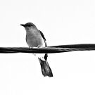 Another Bird by Tommy Seibold