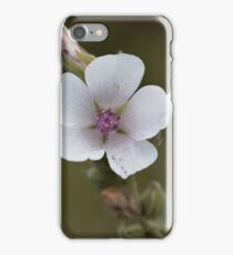 Common marsh mallow, Althaea officinalis iPhone Case/Skin
