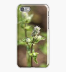 Flowers of a peppermint plant, Mentha x piperita, in a field. iPhone Case/Skin