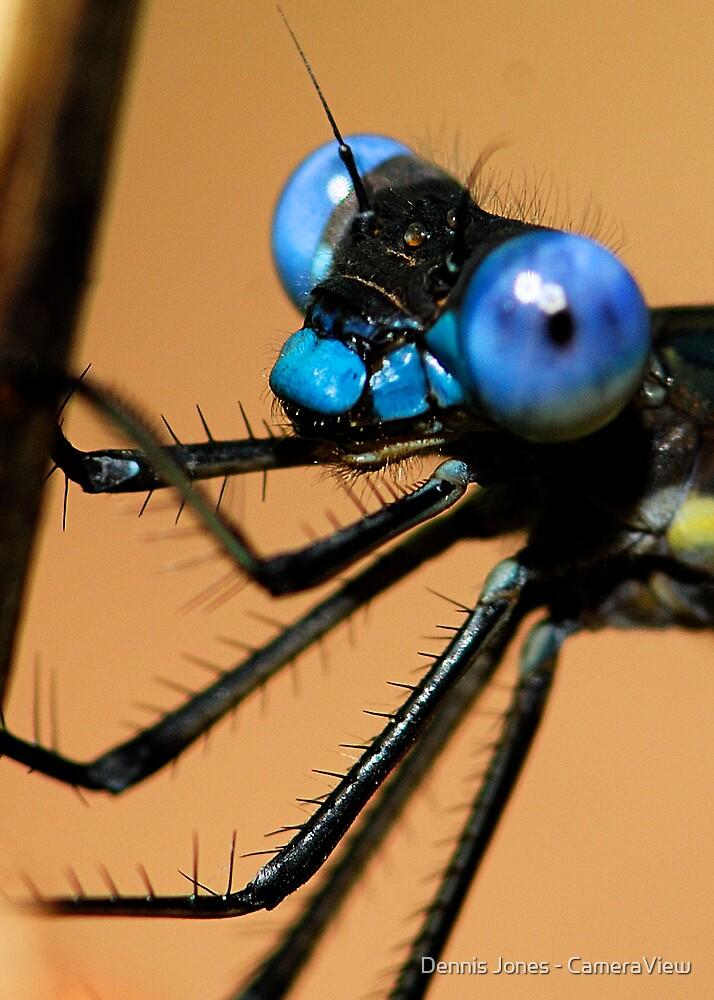 Lil' Blue Eyes - - Archilestes grandis  (Great Spreadwing damselfly) by Dennis Jones - CameraView