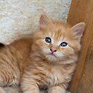 Red Tabby Kitten by Mythos57