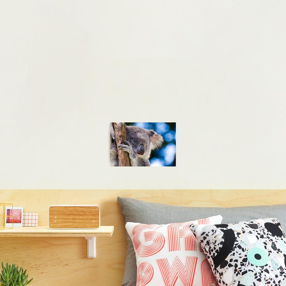 Snugglepot Photographic Print