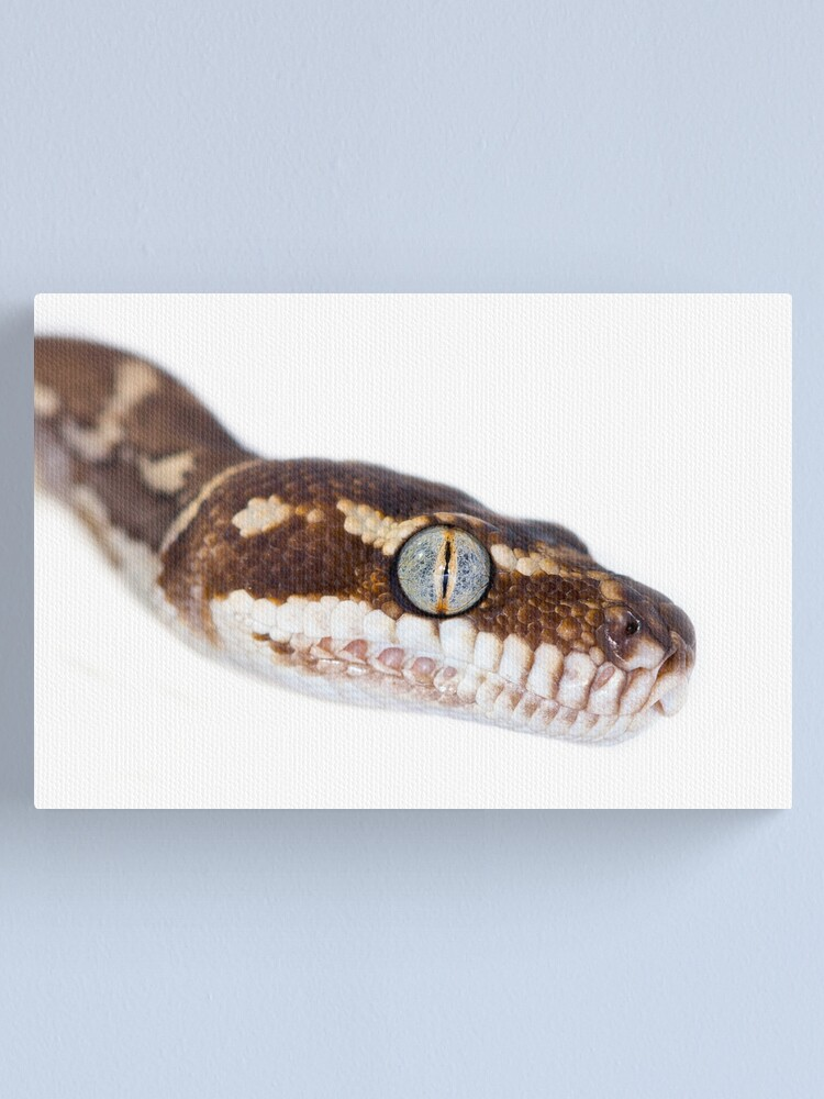 Alternate view of Rough Scaled Python [Morelia carinata] Canvas Print