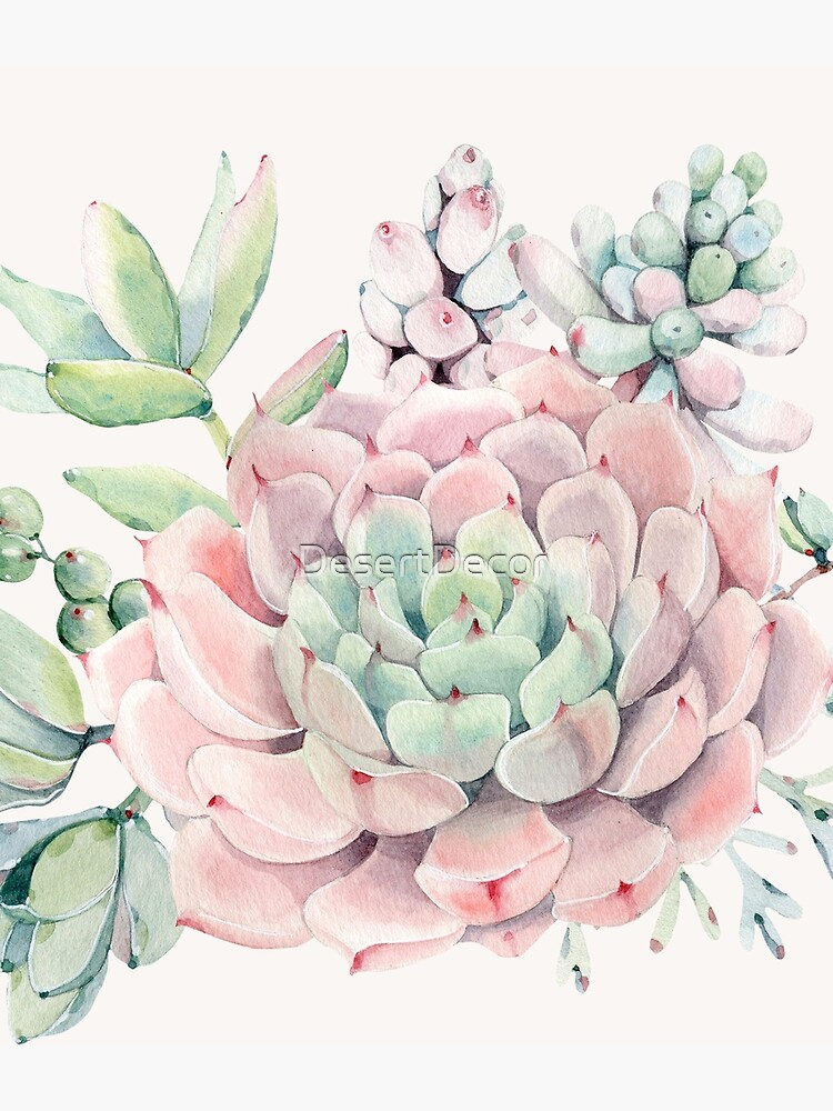 Pretty Succulents Pink and Green Desert Succulent Illustration by DesertDecor
