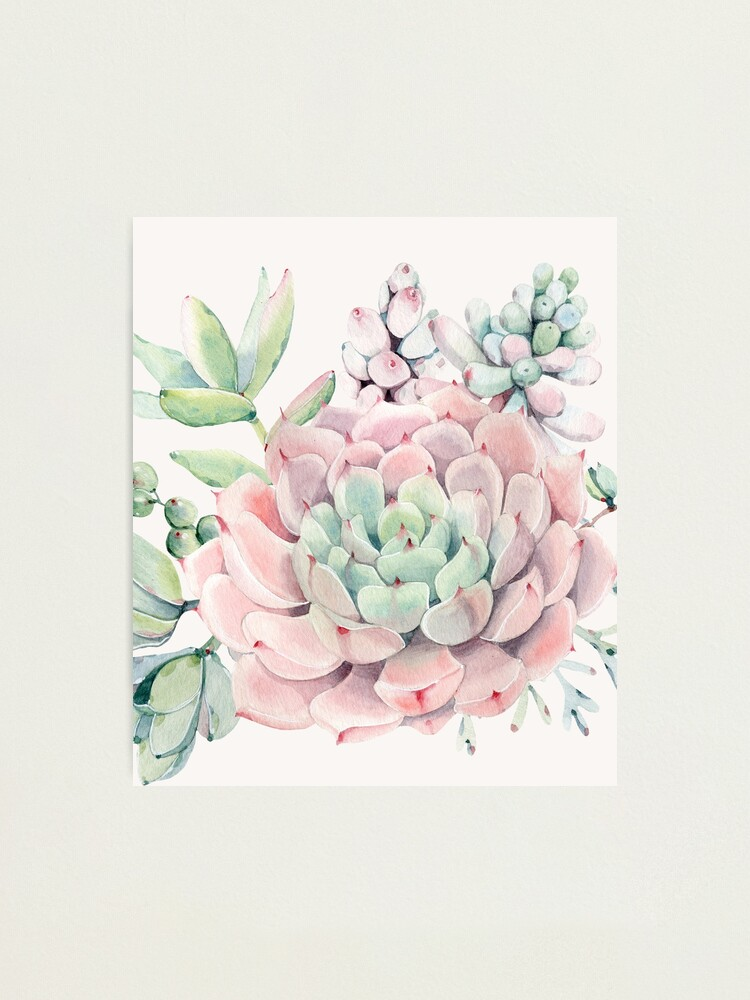Alternate view of Pretty Succulents Pink and Green Desert Succulent Illustration Photographic Print