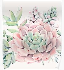 Pretty Succulents Pink and Green Desert Succulent Illustration Poster