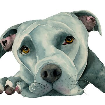 Big Old Head   Pit Bull Dog Watercolor Art by namibear