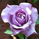 Sonnenbeschiene Blue Moon Rose von BlueMoonRose