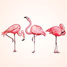 Flamingo by Kelly  Gilleran