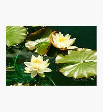 THE LILY POND Photographic Print