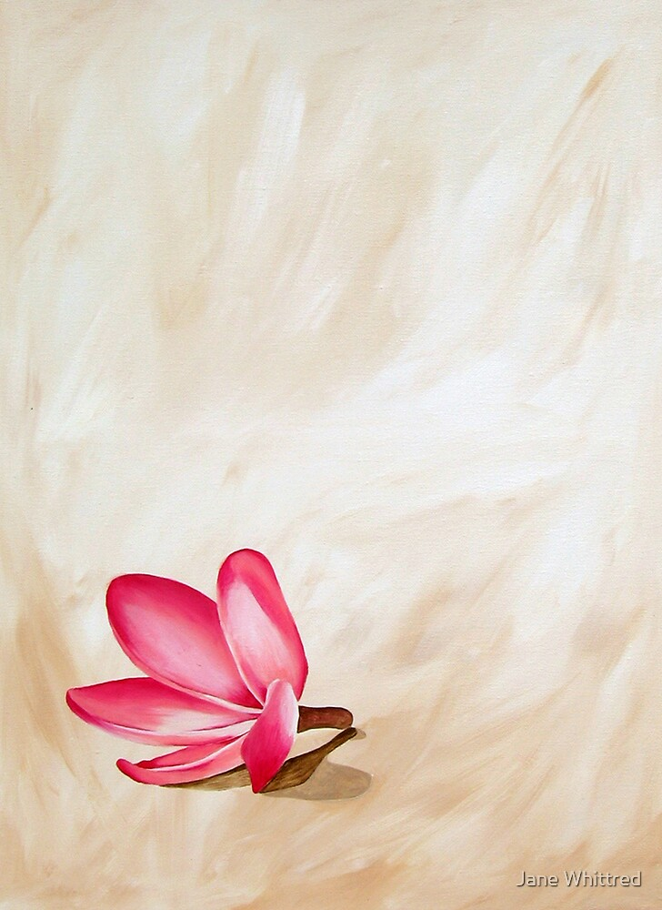 Fallen Frangipani by Jane Whittred
