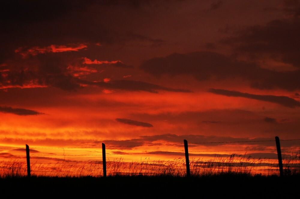Country Skies by Tara Johnson