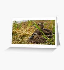 Keeping watch ~ Pacific Black Ducks  Greeting Card