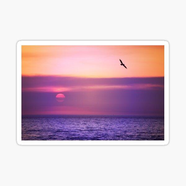 Pelican Sunset Sticker