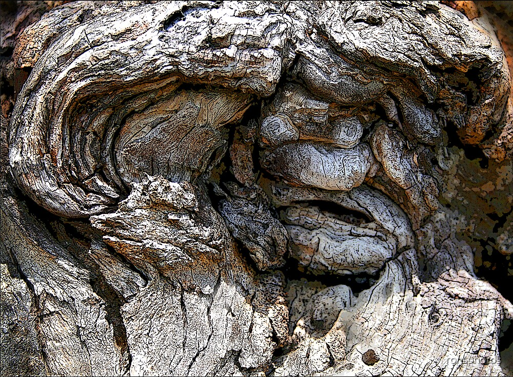 Old gnarled man's face in trunk of tree. by ronsphotos