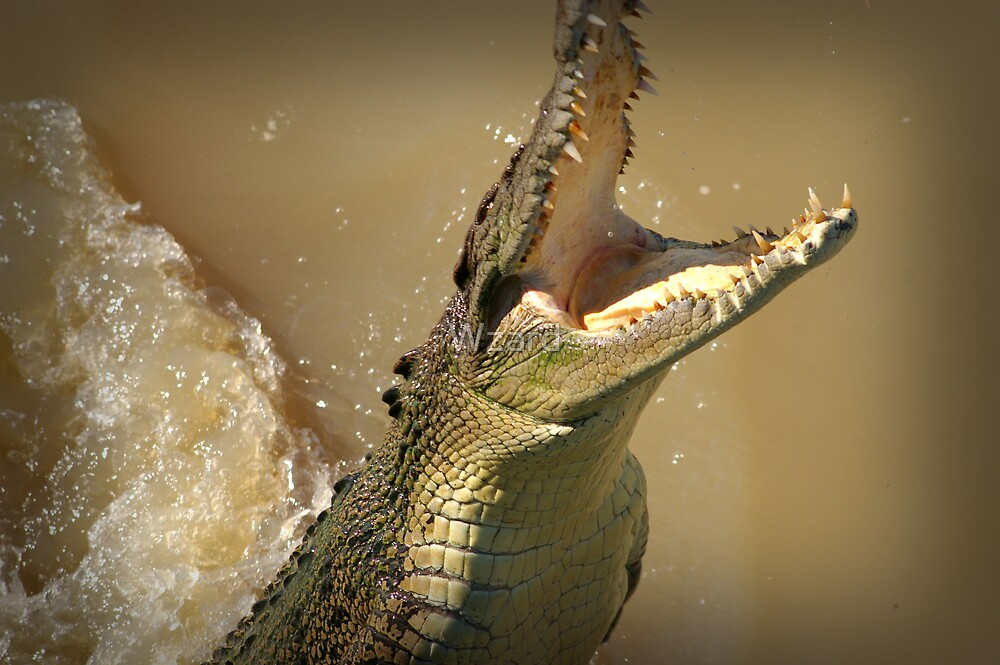 Jumping Croc by Wzard
