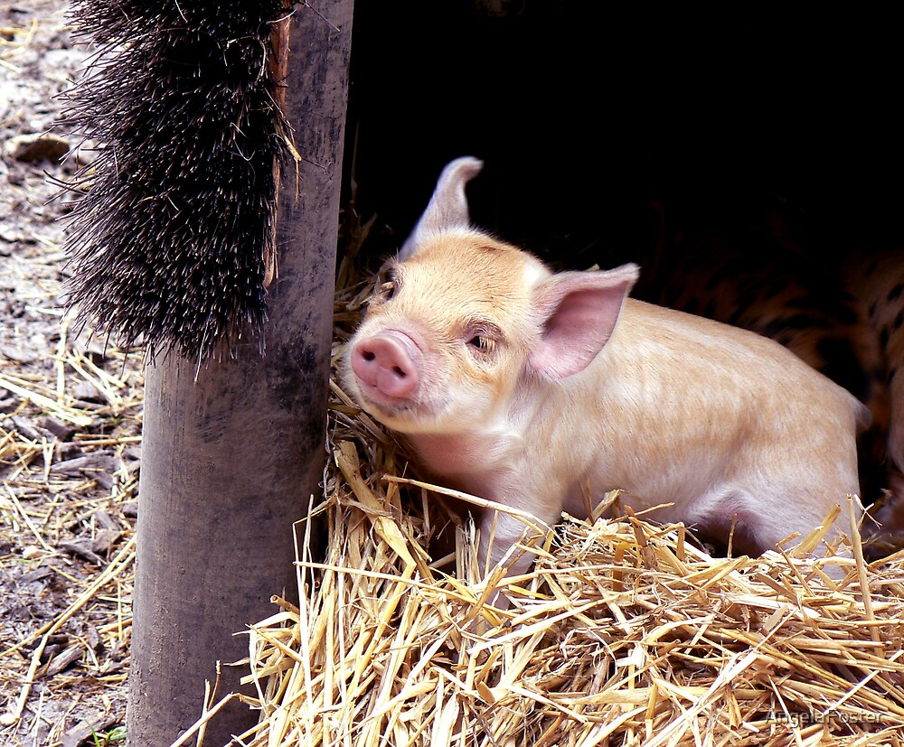 piglet by AngelaFoster