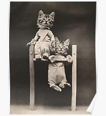 Hang in there! Two kittens on chin up bar Poster