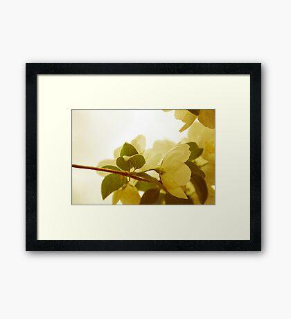 Lightness of Being Framed Print