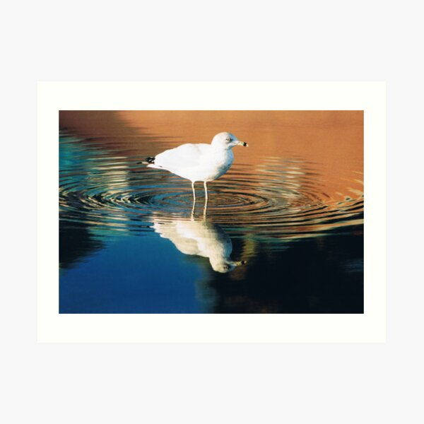 GULL REFLECTION Art Print