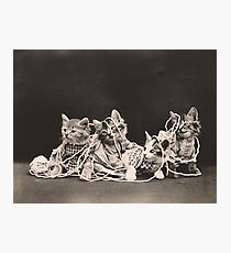 Kittens tangled in yarn Photographic Print