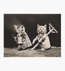 Farming kittens Photographic Print