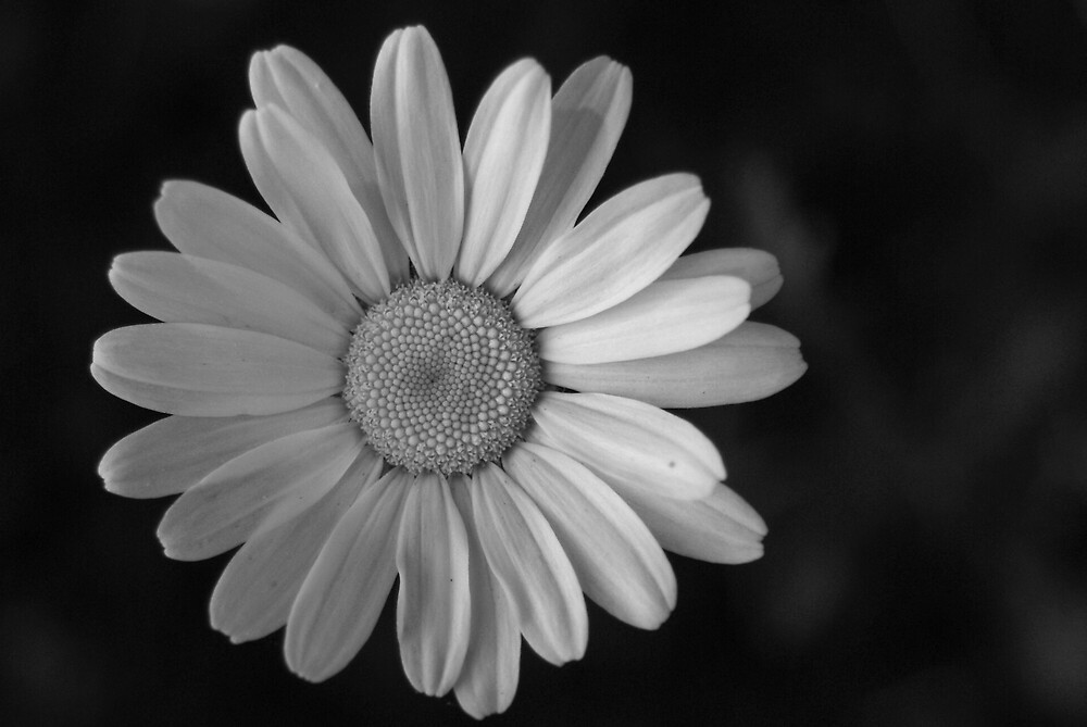 Daisy by BugieDesign