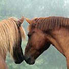 8.8.2017: Friendship of Horses by Petri Volanen