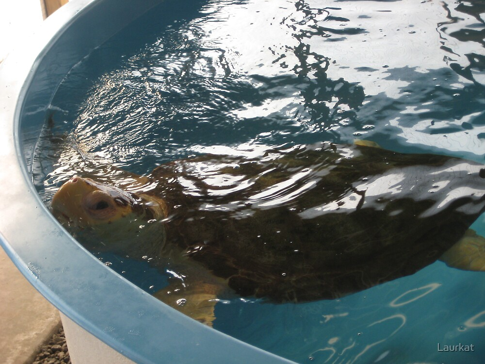 Jekyll sea turtle on its way to recovery by Laurkat