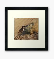 Spotted Thick-Knee Framed Print