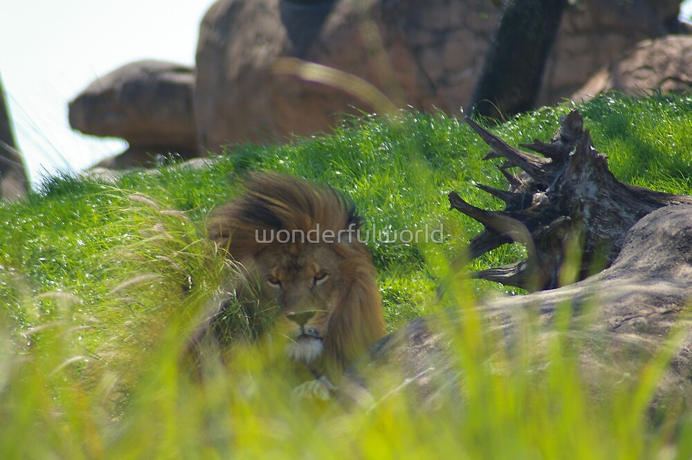 King of the Jungle, March 2006 by wonderfulworld