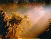 Early morning by Gisele Bedard