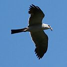 mississippi kite with lunch by Dennis Cheeseman