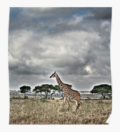 Giraffe Walking Poster